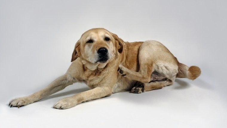 Contact Dermatitis In Dogs