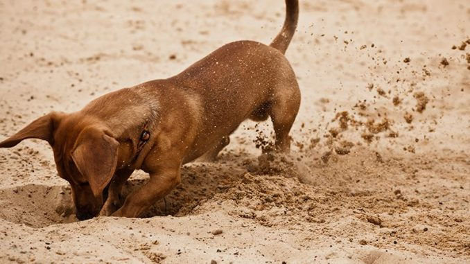 Teaching Your Dog Not to Dig