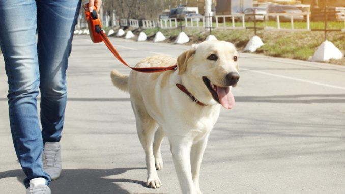Training Your Dog to Walk on a Leash