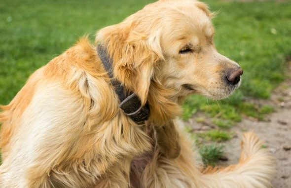 Put your Pooch on a Diet: Tips To Check Weight To Keep The Pet Healthy