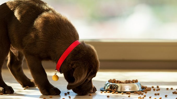 Choosing the Best Vitamin Supplements For Your Dog