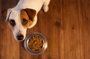 Dog a Picky Eater? What to Do