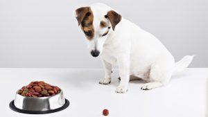Dog Won't Eat: Should You Worry?