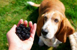 Feeding Senior and Diabetic Dogs