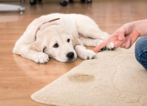 Causes for your dog's house soiling