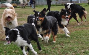 Dog Park Behavior and Etiquette