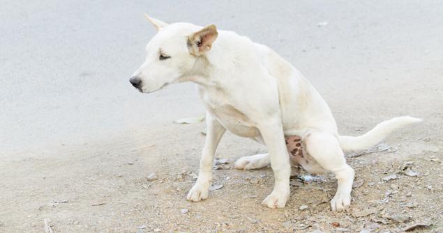 Kidney Diseases In Dogs