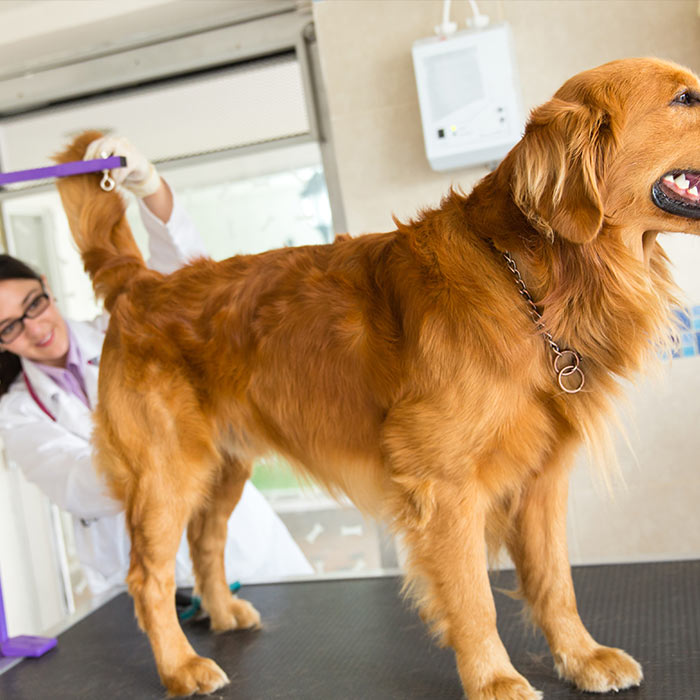 Fecal Impaction In Dogs