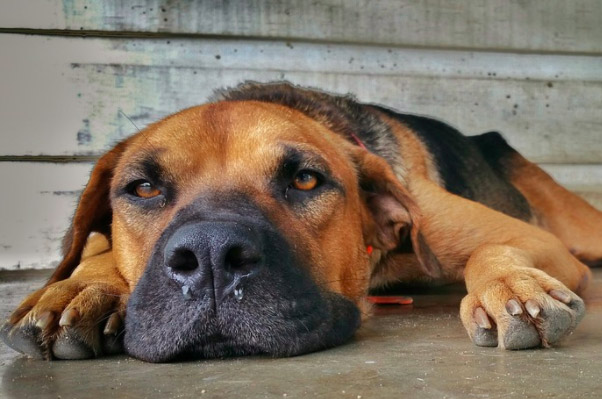 Foreign Body - Nasal In Dogs