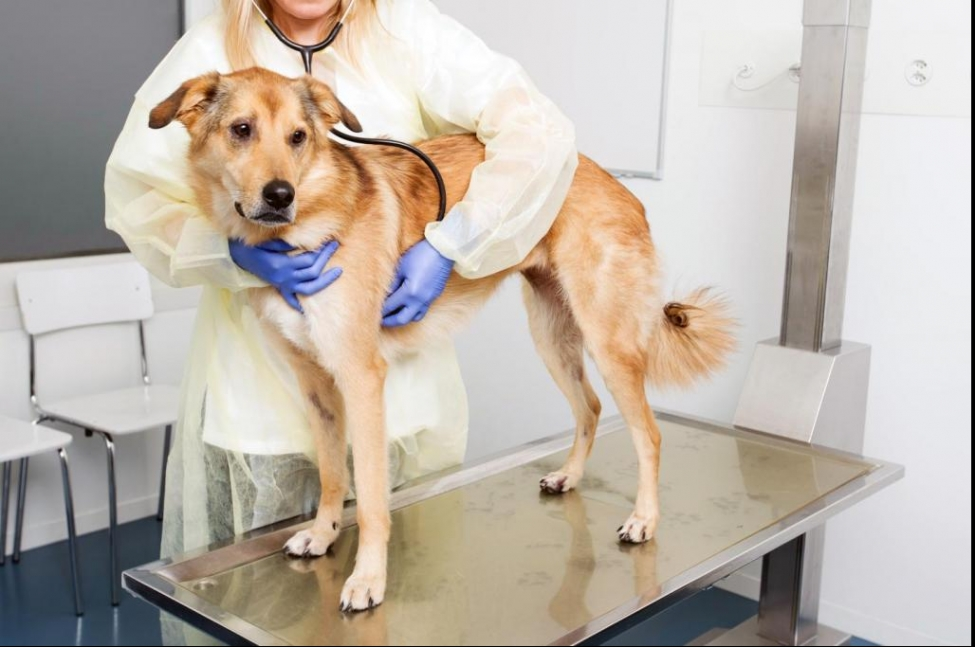 Breast Cancer In Dogs