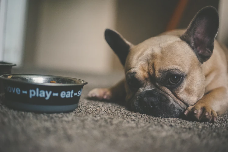 For Your Furbaby: Best Food for Dogs with Sensitive Stomach and Diarrhea